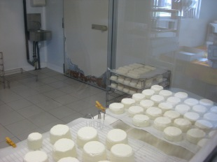 Goat cheese farm